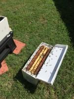Bee keeping beginnings